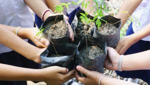 Team pflanzt gemeinsam Bäume.