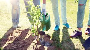 Green Jobs Startup Team gießt frisch gepflanzten Baum