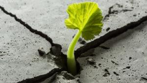 Resilienz - der Schlüssel zum Erfolg